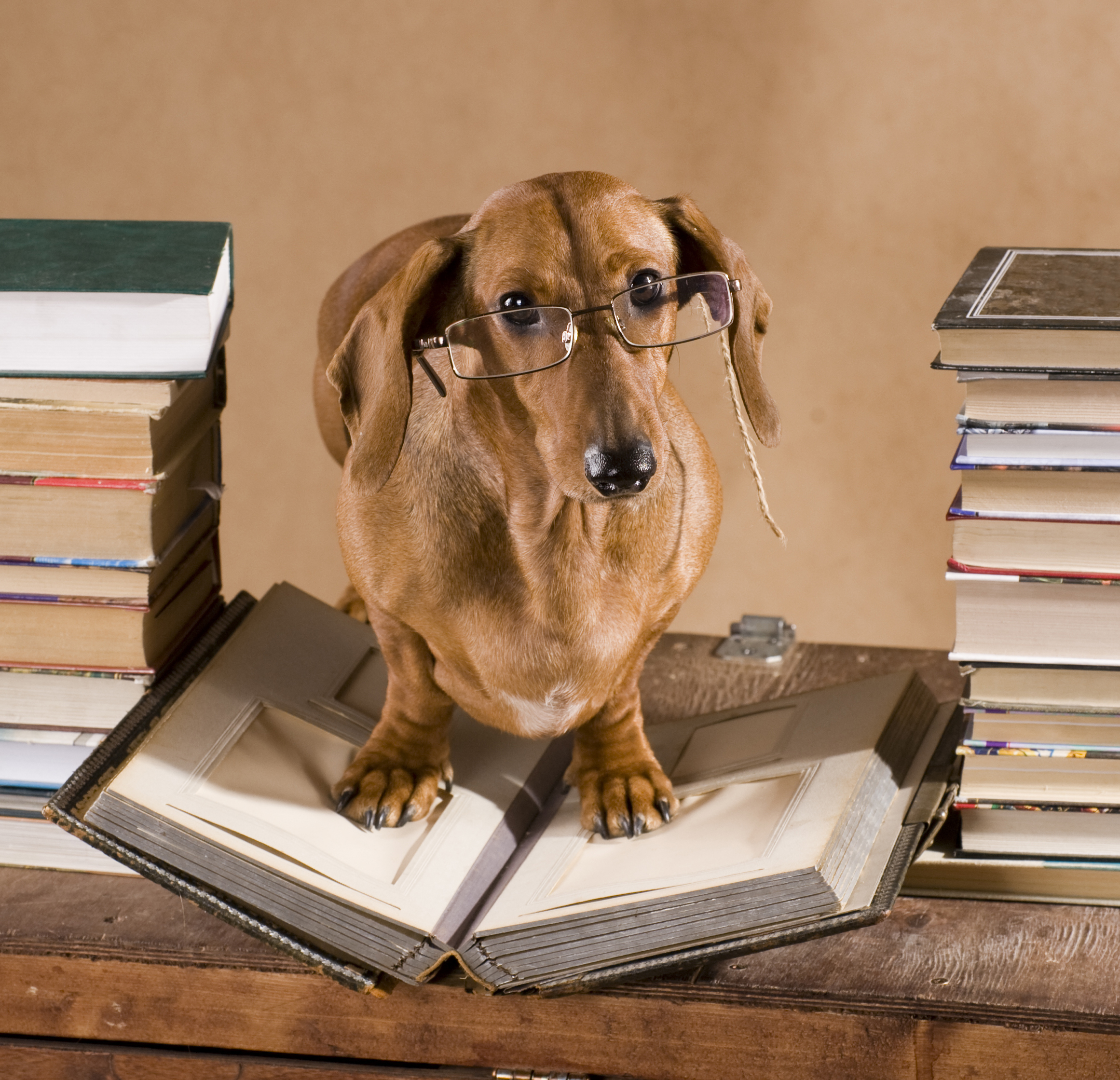 Dog on stack of books
