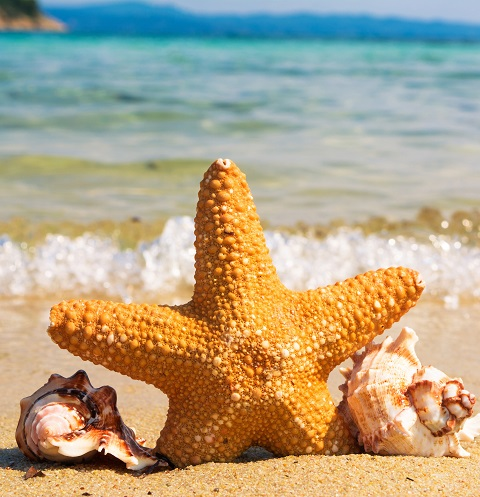 starfish and shells on a sunny beach