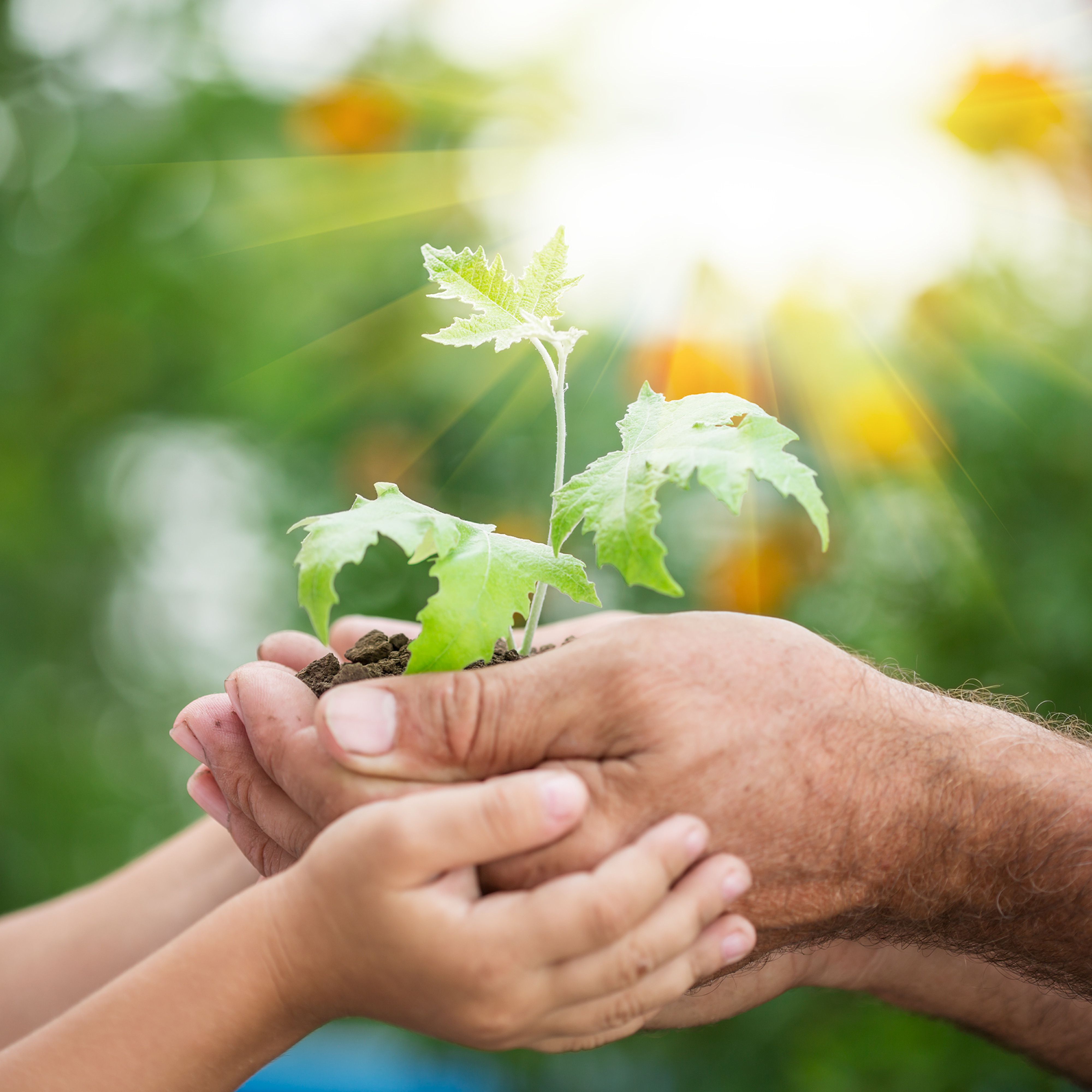 A child holding a man's cupped hands holding a plant.
