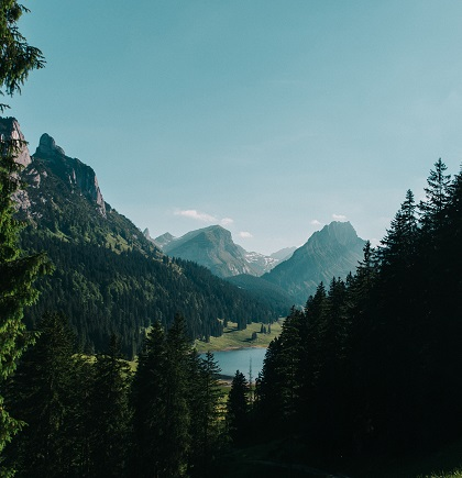 mountain coniferous trees and lake
