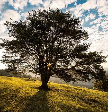 large tree on grassy hill